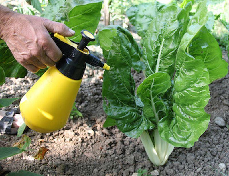 aglio contro i parassiti in giardino